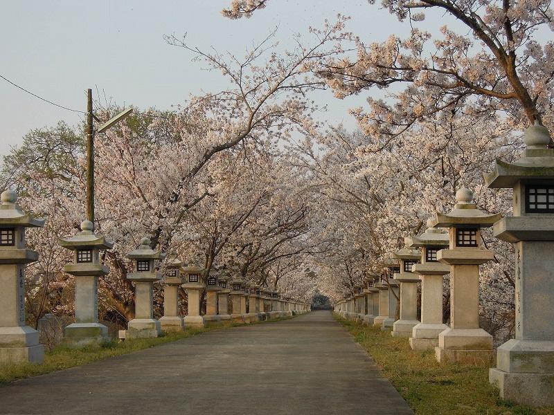 竜桜(りゅうおう)公園