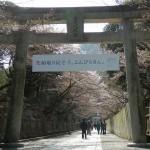 金刀比羅宮〜桜
