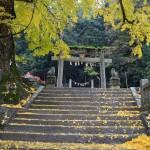 岩部八幡神社 大イチョウ